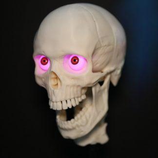 Halloween Skulls Products